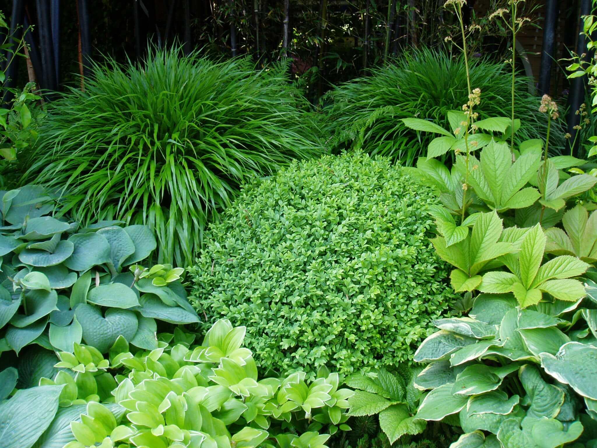 garden design greenery